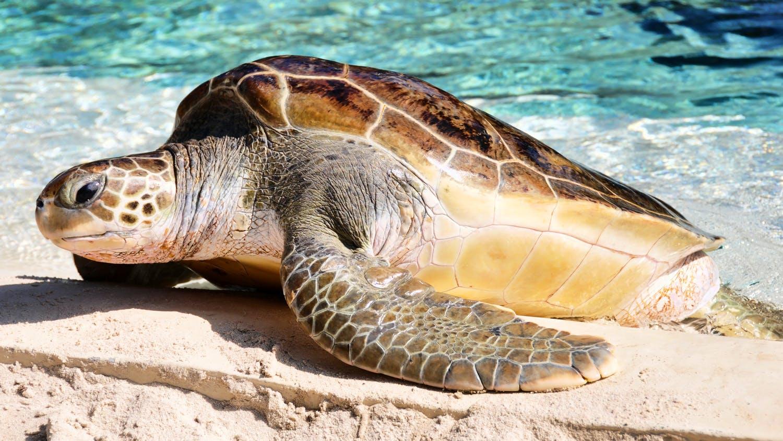 Turtle Nest Monitoring