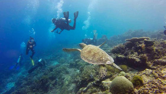 Marine Biology & Conservation Expedition EduTour