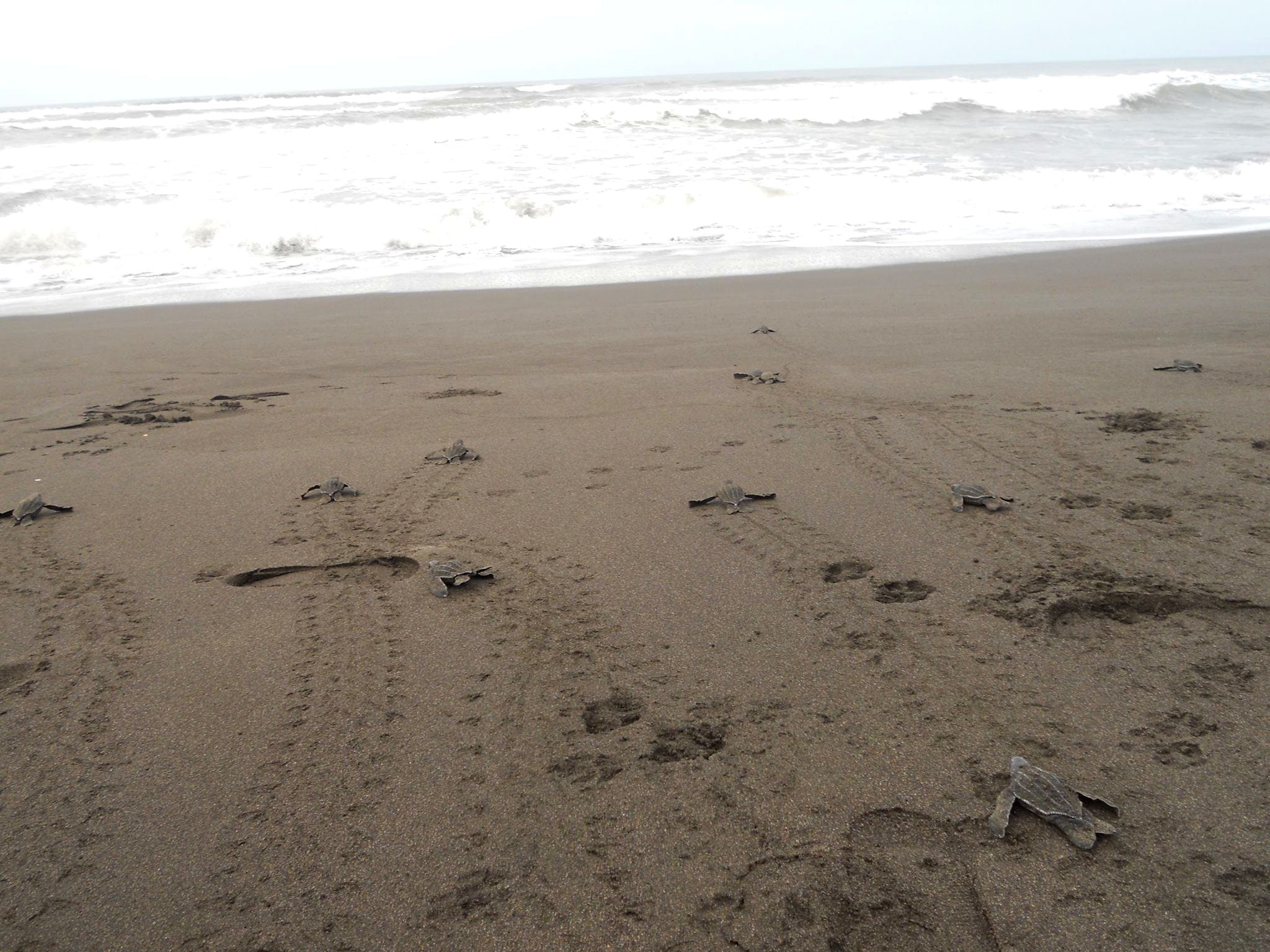 Work in Turtle Conservation