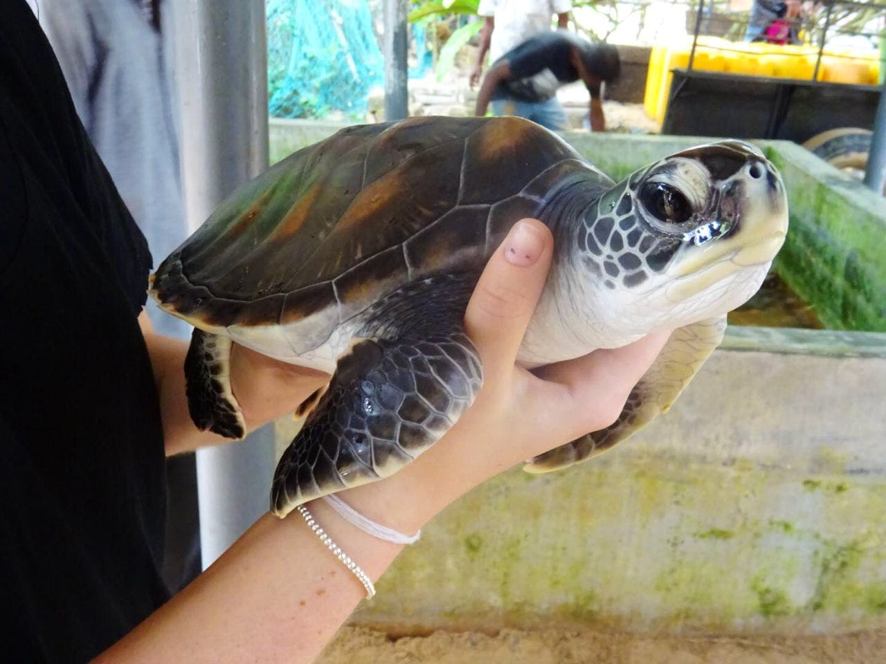 Assistant in Sea Turtle Conservation