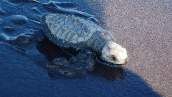 Wildlife: Sea Turtle Conservation