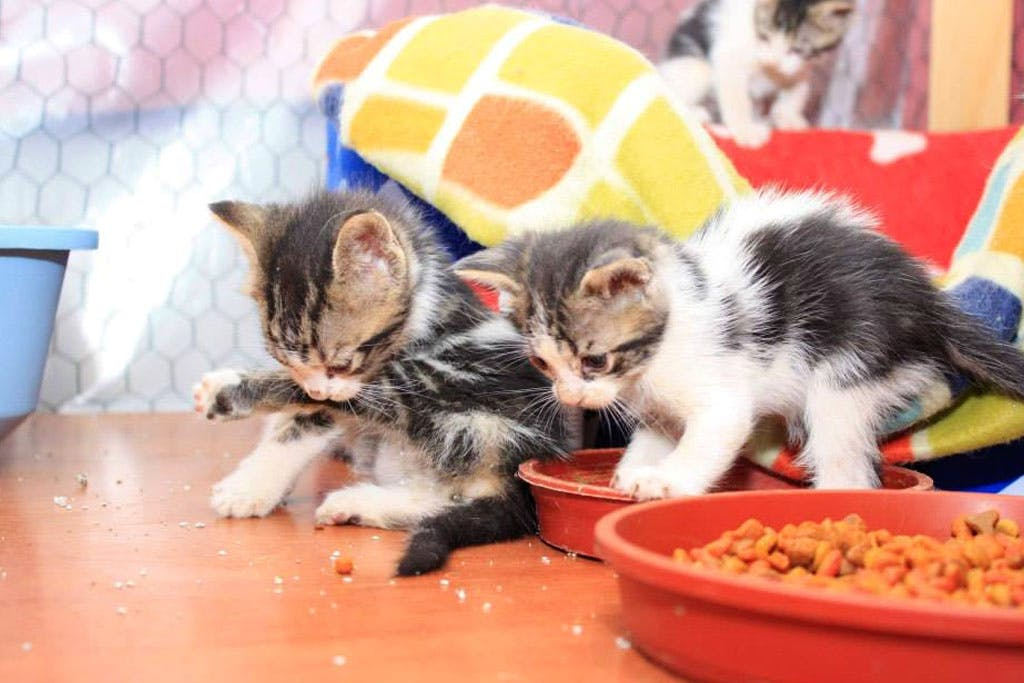 Support a Cat Shelter