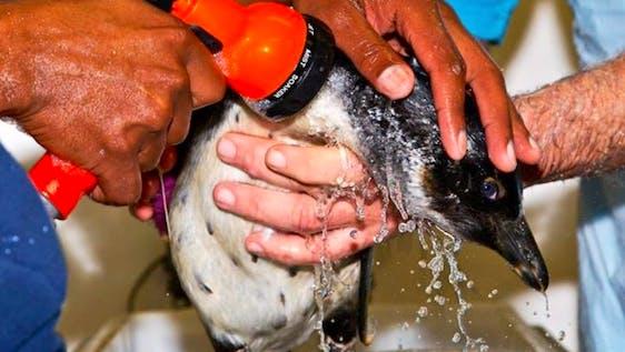 Penguin Rescue and Rehabilitation Assistant