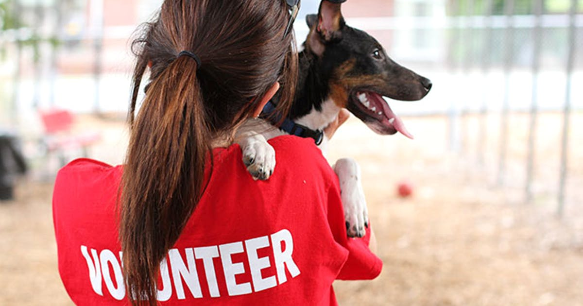 Veterinary & Animal Support