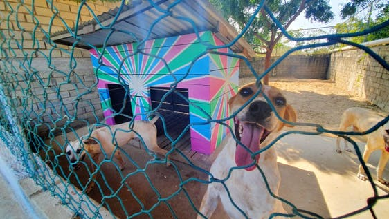 Dog shelter helper and supporter