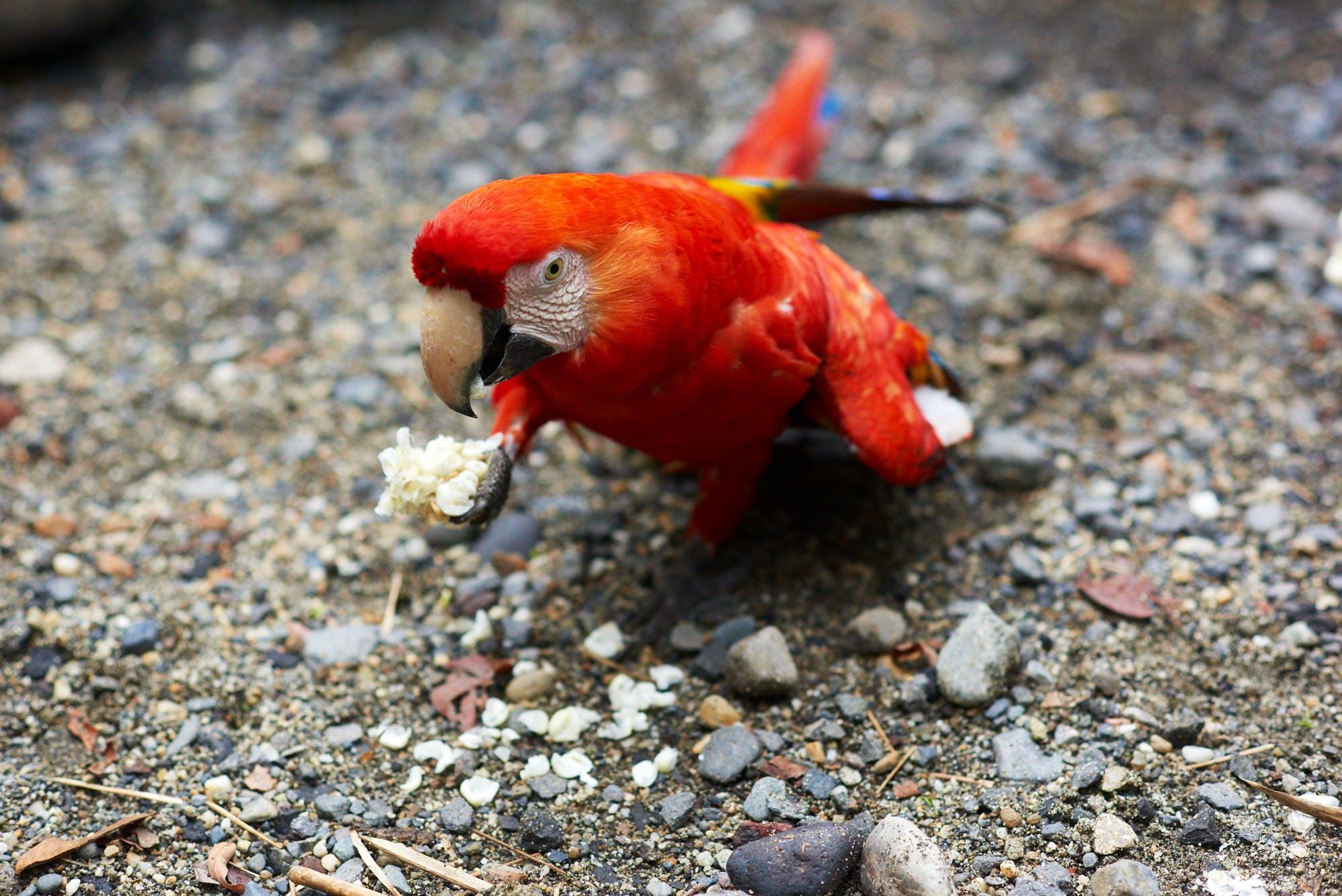 Amazon Animal Conservation