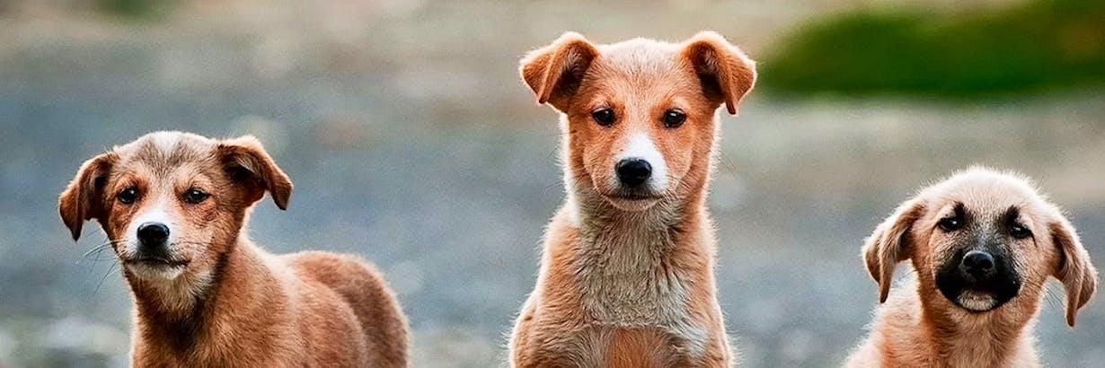 Animal Shelter Volunteer Dog Cat Shelters 2020 Volunteer World