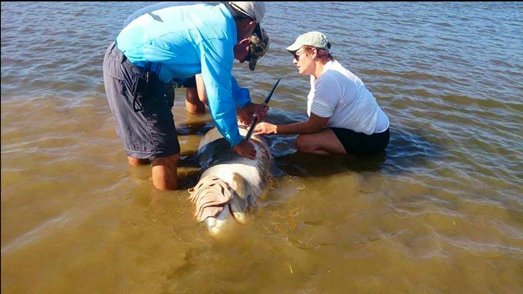 Shark and Marine Ecology