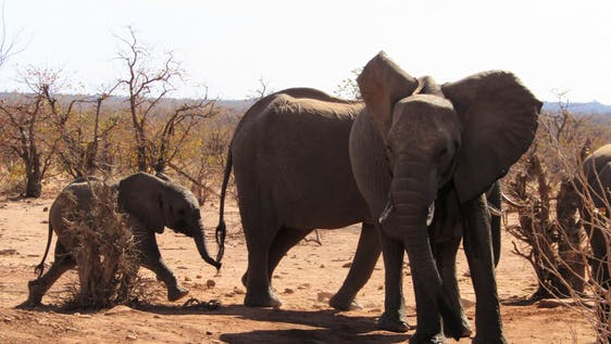 Africa's Big 5 and Wilderness Conservation
