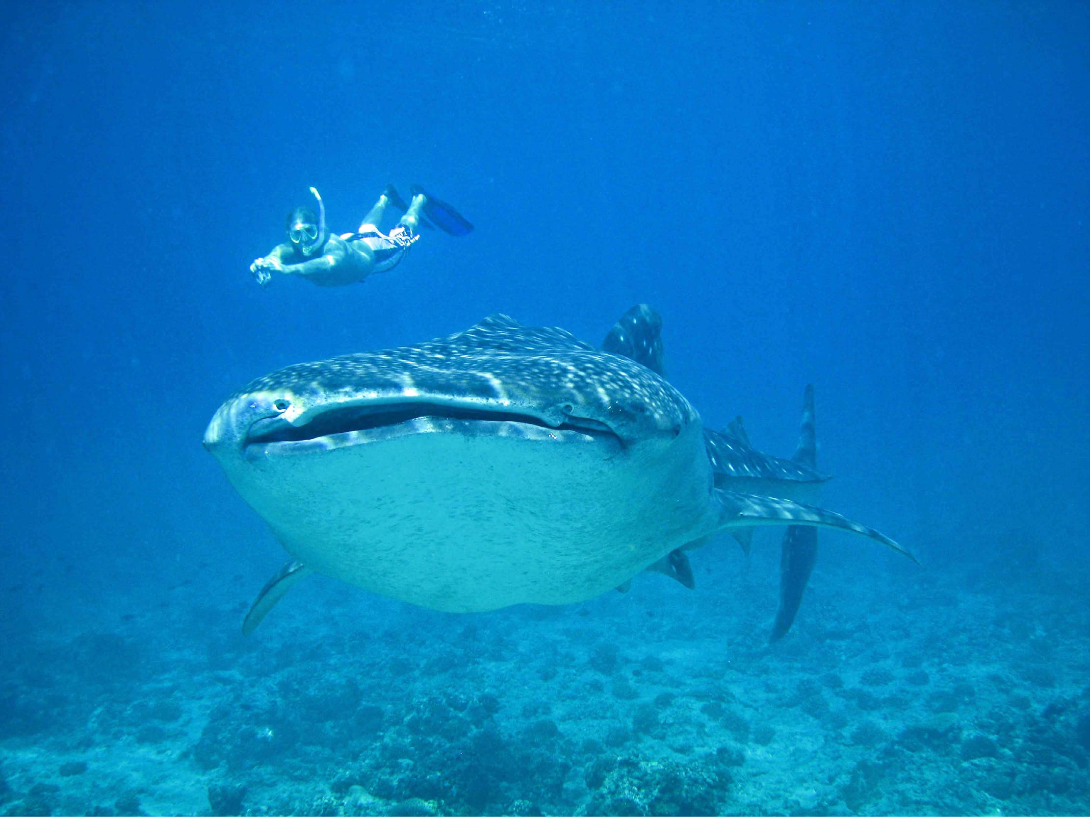 Marine Research and Whale Shark Conservation