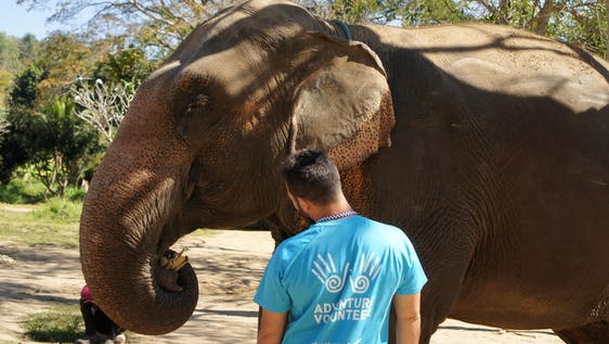 Elephant care and protection