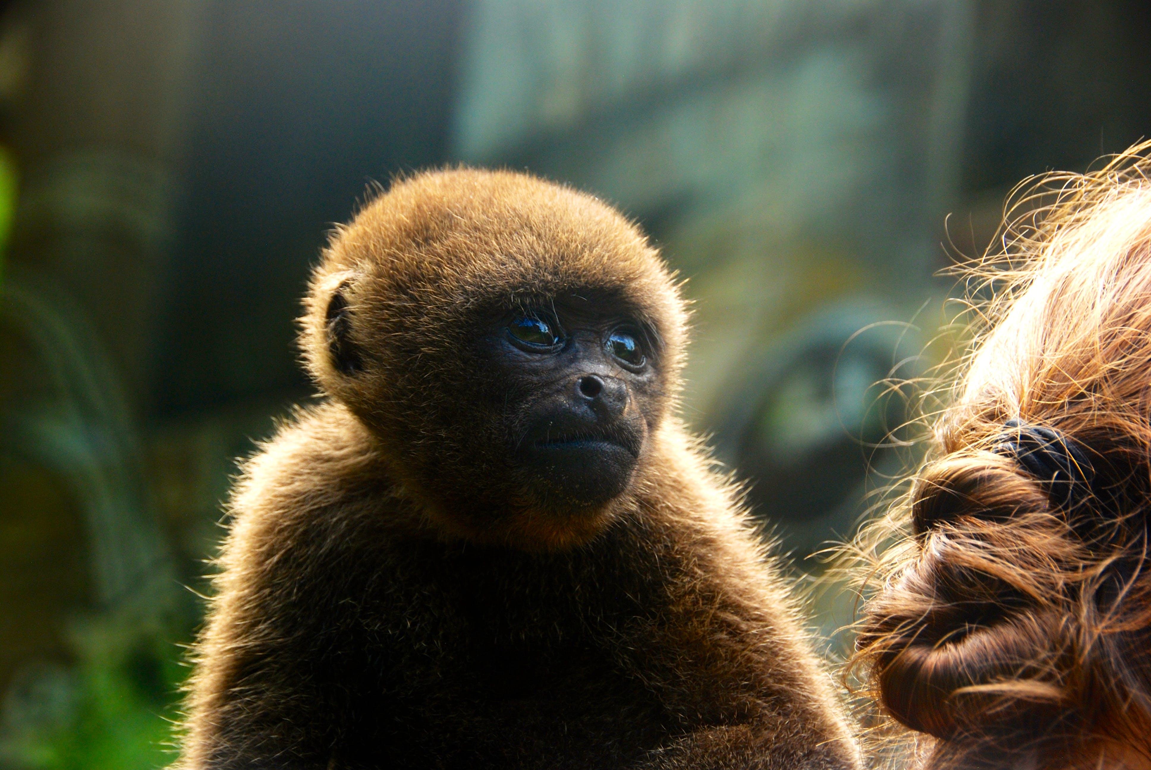 Animal Rehabilitation & Rainforest Conservation