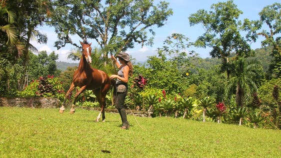 Natural Horsemanship Holiday