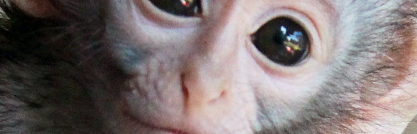 Vervet Monkey Rescue & Rehabilitation