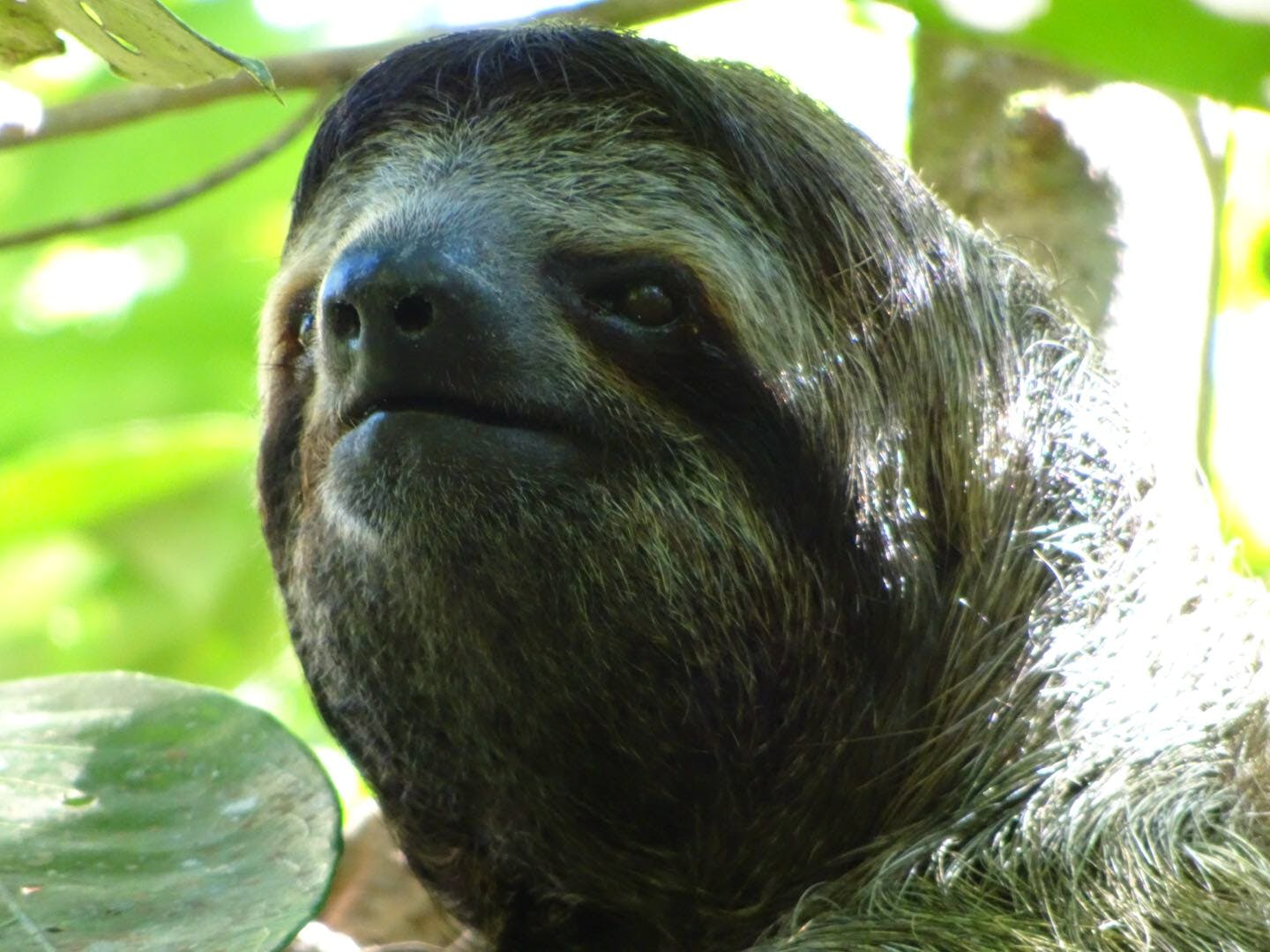 Sloth monitoring and turtle conservation