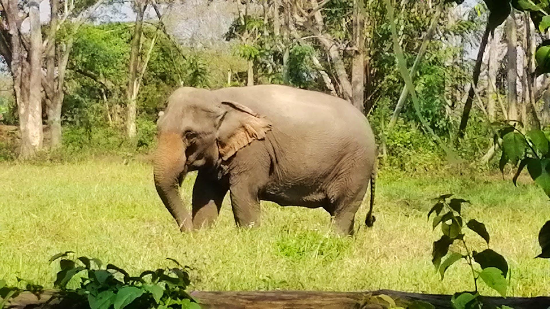 Elephant & Thai Culture